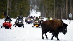 buffalo - snomobiles