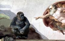 Darwin Creator